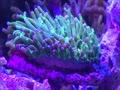 初心者のサンゴ水槽