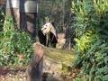 ベルリンのパンダ